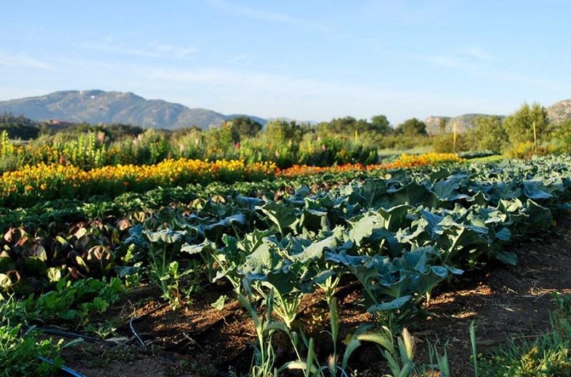 Organic Vegetarian Cuisine