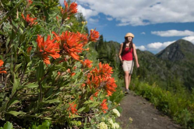 Hiking-with-flowers-at-Idaho-Peak