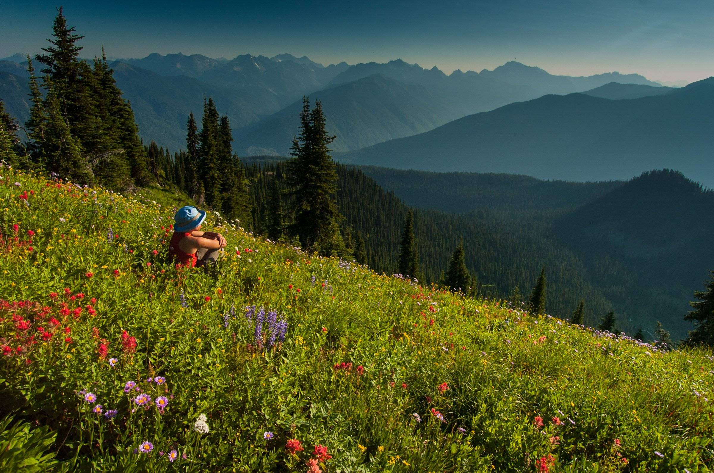 Woman hiker in a field of wild flowers